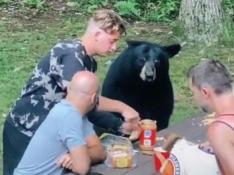 Un oso en un picnic