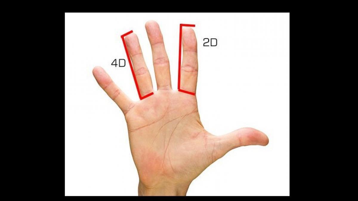 cuanto mide una cuarta con la mano