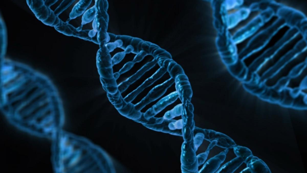 Casi el 10 % de la población sufrirá una enfermedad genética durante su vida